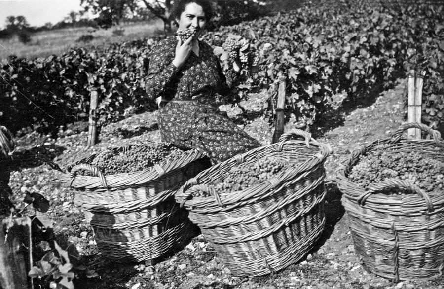 Vendange 1933